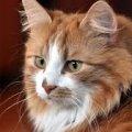 Заслужив мінімум палку ковбаси: на Житомирщині кіт врятував десятки людей від пожежі