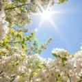 Погода в Житомире и Житомирской области на вторник, 11 апреля