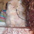 Кошку, спасшую жителей многоквартирного дома в Коростене, наградили кормом-желе