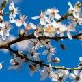 Погода в Житомирі на середу, 19 квітня