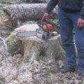 На Житомирщині лісова охорона затримала порушників на місці незаконної рубки дубів