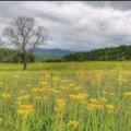 Погода в Житомире и Житомирской области пятницу, 21 апреля