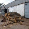 У селі під Житомиром поліцейські вилучили необліковану деревину