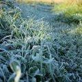 Укргидрометцентр предупредил о похолодании в пяти областях, в том числе Житомирской