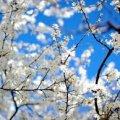 Погода в Житомире и Житомирской области четверг, 27 апреля
