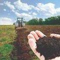 Фермерські господарства на Житомирщині в середньому обробляють по 117 га землі