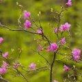 Погода в Житомире и Житомирской области на выходные, 29 и 30 апреля