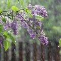 Дощі та грози: синоптики попередили про зміну погоди