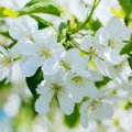 Погода в Житомире и Житомирской области на четверг, 4 мая