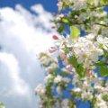 Погода в Житомире и Житомирской области на выходные