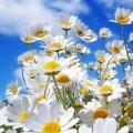 Погода в Житомире и Житомирской области на выходные, 20 и 21 мая