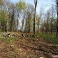 До 1 липня лісівникам доручили розчистити праве узбіччя траси для реконструкції житомирської об'їзної