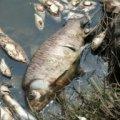 Фахівці встановлюють причину загибелі риби у річці Гуйва під Житомиром