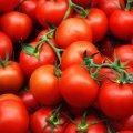 Как мариновать помидоры на зиму: полезные советы