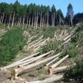 За обсягами незаконної вирубки лісів Житомирська область третя в державі