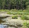 Віддалений Ємільчинський район приваблює своїми заповідниками та унікальними болотами