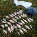 За місяць порушники правил рибальства в Житомирській області сплатили 2,5 тис. грн штрафів