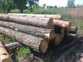 Вісім дубів на 132 тис. грн. зрізали чорні лісоруби в Коростенському районі