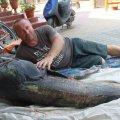 Рибалка з Малина впіймав сома-гіганта.ФОТО