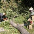 Звалене буревієм в Олевську дерево на добу залишило без світла два будинки