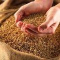 На Житомирщині аграрії намолотили 775,9 тис. тонн зерна