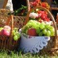 У Житомирі завтра будуть освячувати яблука: розклад богослужінь у Свято-Михайлівському соборі