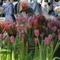 На Покровській у Житомирі хочуть дозволити організувати торговельний майданчик, де продаватимуть живі квіти