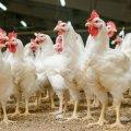 В Україні подорожчають курятина та яйця