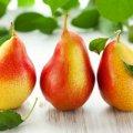 Сира груша корисна для печiнки, а варена - для нирок