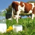 Житомирська область за 7 місяців цього року в 2,6 рази збільшила виробництво молока