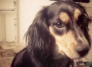В Барановке, пытаясь спасти хозяев в горящем доме, домашняя собачка, по кличке Роза, задохнулась в д ...