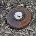 Серед лісу в Коростенському районі грибник натрапив на міну та артснаряд