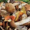 Цього року відро грибів у Романові продають за 160-250 гривень