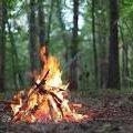 У Коростишівському районі оштрафували грибників, які розпалили багаття серед лісу