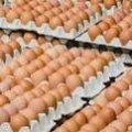 За місяць у Житомирській області на третину подорожчали яйця