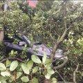 Під час грози у Житомирі дерево впало на Toyota. ФОТО