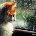 На Житомирщині очікується дощова погода