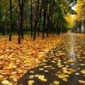 Погода в Житомире и Житомирской области на среду, 20 сентября