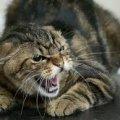 У райцентрі Житомирської області скажений кіт покусав жінку