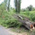 Суд призначив «Укрзалізниці» 850 тис. грн штрафу за незаконну вирубку дерев у Новоград-Волинському районі