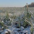Украинцев предупредили о первых заморозках