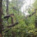 Негода пошкодила у Бердичівському районі 60 га лісових насаджень