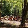 Житель Овруцького району зрубав 51 сосну, завдавши лісові шкоди на 125 тис. грн.