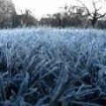 На вихідних у Житомирській області прогнозують заморозки від 0 до -4