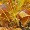 Погода в Житомире и Житомирской области на выходные, 30 сентября и 1 октября