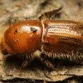 На Житомирщині можуть зникнути червонокнижні види рослин і тварин