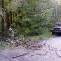 Через негоду у Баранівському районі дерево впало на дорогу. ФОТО