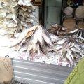 На продавців живої та в'яленої риби в Житомирській області склали десяток протоколів