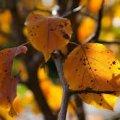 Погода в Житомире и Житомирской области на среду, 11 октября