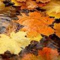Погода в Житомирі і Житомирській області, п'ятниця 13 жовтня